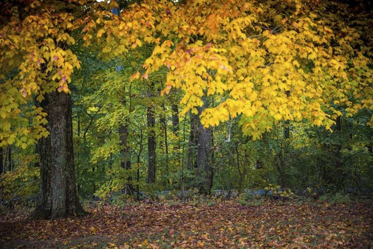 Southern Indiana forest in the fall - Clark State Forest